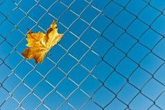 Κίτρινο φύλλο πτώσης φθινοπώρου που πιάνεται στο πλέγμα καλωδίων Στοκ εικόνα με δικαίωμα ελεύθερης χρήσης