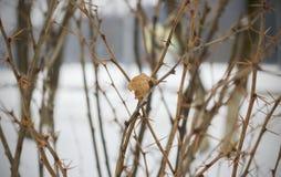 Κίτρινο φύλλο σε έναν κλάδο με τις βελόνες στοκ φωτογραφίες