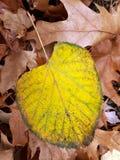 Κίτρινο φύλλο στο έδαφος στοκ φωτογραφία με δικαίωμα ελεύθερης χρήσης