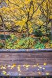 Κίτρινο φύλλο σφενδάμνου στον πάγκο Στοκ Εικόνες