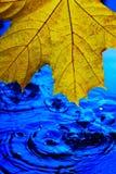 Κίτρινο φύλλο σφενδάμου πέρα από το μπλε νερό στις πτώσεις και τους παφλασμούς Η έννοια της άφιξης του φθινοπώρου αυτό βροχή ` s στοκ φωτογραφία
