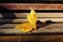 Κίτρινο φύλλο σφενδάμου στοκ φωτογραφία με δικαίωμα ελεύθερης χρήσης