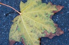 Κίτρινο φύλλο φθινοπώρου Πλαίσιο φύλλων γενικά σύσταση στοιχείων σχεδίου φθινοπώρου Στοκ Εικόνες