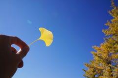 Κίτρινο φύλλο με το υπόβαθρο μπλε ουρανού Στοκ εικόνα με δικαίωμα ελεύθερης χρήσης