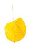 Κίτρινο φύλλο πτώσης Στοκ εικόνες με δικαίωμα ελεύθερης χρήσης
