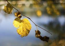 Κίτρινο φύλλο σε έναν κλάδο Στοκ Φωτογραφία
