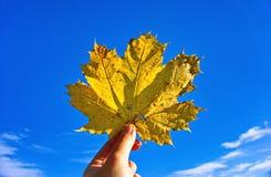 Κίτρινο φύλλο σφενδάμου στον ουρανό Στοκ εικόνες με δικαίωμα ελεύθερης χρήσης