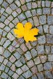 Κίτρινο φύλλο σφενδάμου στο οδικό κεραμίδι Στοκ εικόνες με δικαίωμα ελεύθερης χρήσης