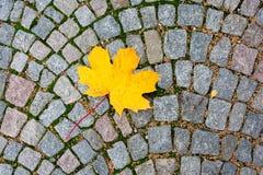 Κίτρινο φύλλο σφενδάμου στο οδικό κεραμίδι Στοκ φωτογραφίες με δικαίωμα ελεύθερης χρήσης