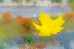 Κίτρινο φύλλο σφενδάμου φθινοπώρου στο γυαλί με τις πτώσεις νερού Στοκ φωτογραφίες με δικαίωμα ελεύθερης χρήσης
