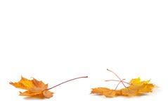 Κίτρινο φύλλο φθινοπώρου Στοκ εικόνες με δικαίωμα ελεύθερης χρήσης