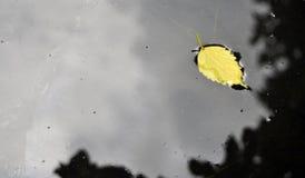 Κίτρινο φύλλο Στοκ εικόνα με δικαίωμα ελεύθερης χρήσης