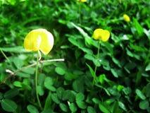 Κίτρινο φύλλο Στοκ εικόνες με δικαίωμα ελεύθερης χρήσης