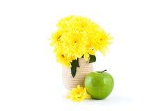 Κίτρινο χρυσάνθεμο με τη Apple Στοκ φωτογραφίες με δικαίωμα ελεύθερης χρήσης