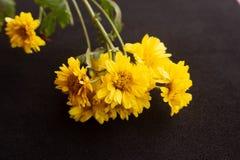 Κίτρινο λουλούδι χρυσάνθεμων στοκ εικόνες με δικαίωμα ελεύθερης χρήσης