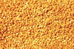 Κίτρινο arahar DAL Στοκ φωτογραφία με δικαίωμα ελεύθερης χρήσης