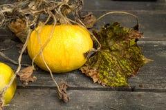Κίτρινο autumn2 στοκ φωτογραφίες με δικαίωμα ελεύθερης χρήσης