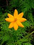 Κίτρινο Bloomer Στοκ φωτογραφία με δικαίωμα ελεύθερης χρήσης