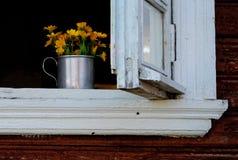Κίτρινο calendula στο άσπρο ξύλινο παράθυρο Στοκ εικόνες με δικαίωμα ελεύθερης χρήσης
