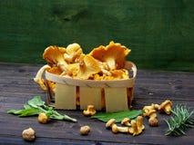 Κίτρινο chanterelle στο καλάθι στοκ εικόνες