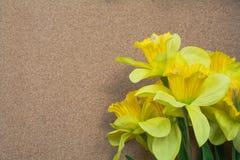 Κίτρινο Daffodils σε ένα ουδέτερο υπόβαθρο Στοκ φωτογραφία με δικαίωμα ελεύθερης χρήσης