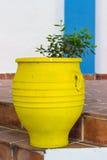 Κίτρινο flowerpot Στοκ Εικόνα
