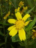 Κίτρινο folwer στοκ φωτογραφία με δικαίωμα ελεύθερης χρήσης