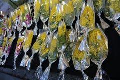 Κίτρινο mimosa για όλες τις γυναίκες κατά τη διάρκεια της ημέρας των γυναικών Στοκ Εικόνες