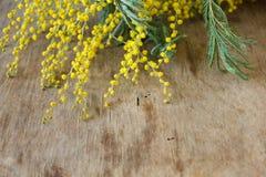 Κίτρινο mimosa κλάδων Στοκ εικόνες με δικαίωμα ελεύθερης χρήσης