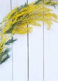 Κίτρινο mimosa λουλουδιών στον άσπρο ξύλινο πίνακα Στοκ Φωτογραφία