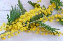 Κίτρινο mimosa λουλουδιών στον άσπρο ξύλινο πίνακα Στοκ εικόνες με δικαίωμα ελεύθερης χρήσης