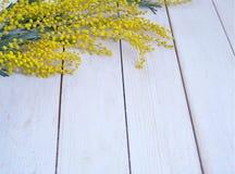 Κίτρινο mimosa λουλουδιών στον άσπρο ξύλινο πίνακα Στοκ Φωτογραφίες