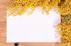 Κίτρινο mimosa στους ξύλινους πίνακες Στοκ Εικόνες
