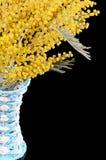 Κίτρινο mimosa στο μαύρο υπόβαθρο Στοκ εικόνα με δικαίωμα ελεύθερης χρήσης