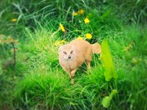 Κίτρινο mongoose στοκ εικόνα με δικαίωμα ελεύθερης χρήσης