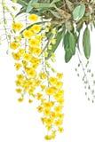 Κίτρινο Orchid Στοκ εικόνα με δικαίωμα ελεύθερης χρήσης