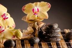 Κίτρινο Orchid Στοκ φωτογραφία με δικαίωμα ελεύθερης χρήσης