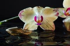 Κίτρινο Orchid Στοκ Φωτογραφίες