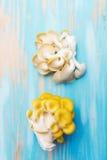 Κίτρινο pleurotus στο μπλε υπόβαθρο Στοκ εικόνες με δικαίωμα ελεύθερης χρήσης