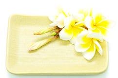 Κίτρινο Plumeria Στοκ Εικόνα