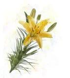 Κίτρινο watercolor κρίνων Στοκ Εικόνα