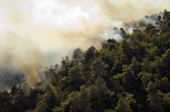 καίγοντας δάσος της Αθήν&al στοκ εικόνες
