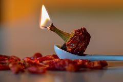 καίγοντας καυτό πιπέρι τσί&lam Στοκ εικόνα με δικαίωμα ελεύθερης χρήσης