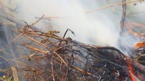 Καίγοντας κινηματογράφηση σε πρώτο πλάνο χλόης απόθεμα βίντεο