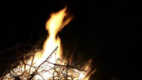 Καίγοντας κλάδοι δέντρων στην πυρκαγιά Μεγάλη πυρά προσκόπων από το έγκαυμα κλάδων τη νύχτα στη δασική μεγάλη πυρκαγιά που καίει  απόθεμα βίντεο