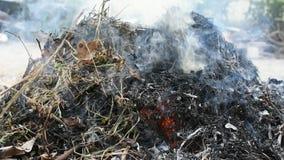 Καίγοντας ξηρά φύλλα απόθεμα βίντεο