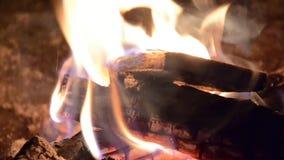 Καίγοντας ξύλο εμπορικών σημάτων πυρών προσκόπων πυρκαγιάς φιλμ μικρού μήκους