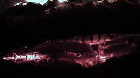 Καίγοντας ξύλινο σιγοκαίγοντας ξύλινο σιγοκαίγοντας κούτσουρο Καίγοντας κούτσουρα που καίγονται στενό στον επάνω πυρκαγιάς Το σιγ απόθεμα βίντεο