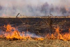 Καίγοντας τομέας χλόης την άνοιξη Στοκ φωτογραφίες με δικαίωμα ελεύθερης χρήσης