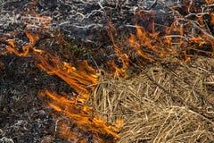 Καίγοντας τομέας χλόης την άνοιξη Στοκ Εικόνες
